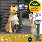 【直送可】ご帰宅を歓迎♪可愛いソーラーライト付柴犬 「タロー」