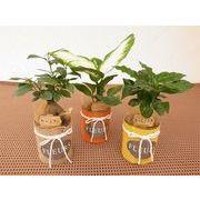 グラスジュートウェア ミニ観葉植物/観葉植物/モダン/インテリア/寄せ植え/ガーデニング
