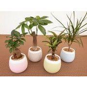 パステルベールS ミニ観葉植物/観葉植物/モダン/インテリア/寄せ植え/ガーデニング