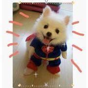 ★即納可能★ハロウィン大人気超可愛い犬服★スーパーマンペットの大変身★元気なドッグウェア!(S-XL)