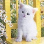 Paper+Design ペーパーナプキン  猫×フラワー