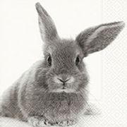 Paper+Design ペーパーナプキン ウサギ