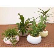 レア観葉パステルエッグ ミニ観葉植物/観葉植物/モダン/インテリア/寄せ植え/ガーデニング