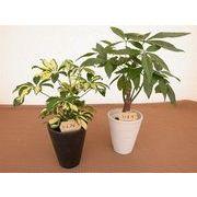 アースカラーウェアL ミニ観葉植物/観葉植物/モダン/インテリア/寄せ植え/ガーデニング