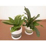 リーフウェア皿付 ミニ観葉植物/観葉植物/モダン/インテリア/寄せ植え/ガーデニング