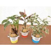 ツートンブリキウェア L  ミニ観葉植物/観葉植物/モダン/インテリア/寄せ植え/ガーデニング