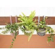 レードルブリキ ミニ観葉植物/観葉植物/モダン/インテリア/寄せ植え/ガーデニング