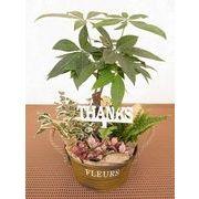 観葉ブリキシャビー寄せ ミニ観葉植物/観葉植物/モダン/インテリア/寄せ植え/ガーデニング