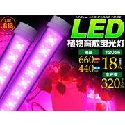 <LED電球・蛍光灯>植物や野菜の育成に  LED植物育成蛍光灯 120cm