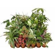 ポットミックス ミニ観葉植物/観葉植物/モダン/インテリア/寄せ植え/ガーデニング