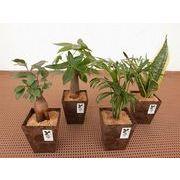 バイオマスポット S ミニ観葉植物/観葉植物/モダン/インテリア/寄せ植え/ガーデニング