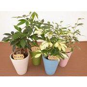 パステルアースウェア L ミニ観葉植物/観葉植物/モダン/インテリア/寄せ植え/ガーデニング