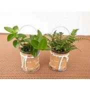 グラスコルクウェア ミニ観葉植物/観葉植物/モダン/インテリア/寄せ植え/ガーデニング