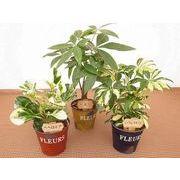 ブリキシャビーウェアL ミニ観葉植物/観葉植物/モダン/インテリア/寄せ植え/ガーデニング