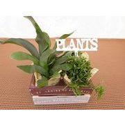 レア観葉ヴィンテージBOX ミニ観葉植物/観葉植物/モダン/インテリア/寄せ植え/ガーデニング