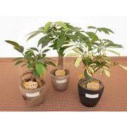 バイオマスサークル ミニ観葉植物/観葉植物/モダン/インテリア/寄せ植え/ガーデニング