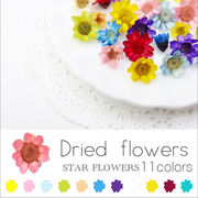 ネイル 新色追加♪ スターフラワー ガラスドームに【生花を使用したドライフラワー11色】約10個入り