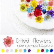 ネイル 新色追加♪ スターフラワー ガラスドームに【生花を使用したドライフラワー12色】約10個入り