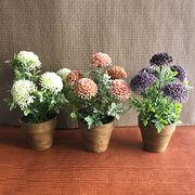 お部屋をグッと華やかに枯れない植物で作る手軽な癒し空間【フラワーポット・トールヒドランジア】