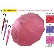 桜が浮き出る傘