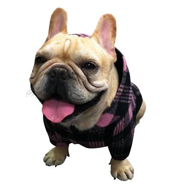 フレンチブルドッグ 犬服