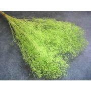 大地農園 プリザーブドフラワー ソフトミニカスミ草 ミントグリーン