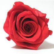 【業務用】【卸】 即納 枯れない花 プリザーブドフラワー 花材 バラ ローズ