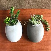 お部屋をグッと華やかに枯れない植物で作る手軽な癒し空間【サキュレントウォールポット・S】