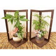 和風ラティス寄せ ミニ観葉植物/観葉植物/モダン/インテリア/寄せ植え/ガーデニング