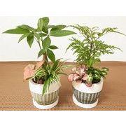 リーフウェア寄せ皿付 ミニ観葉植物/観葉植物/モダン/インテリア/寄せ植え/ガーデニング