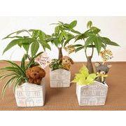 アニマルハウス寄せ ミニ観葉植物/観葉植物/モダン/インテリア/寄せ植え/ガーデニング