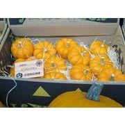 ハロウィン用北海道産かぼちゃ ミニパンプキン ハロウィン/かぼちゃ/カボチャ/パンプキン/北海道産