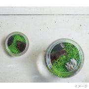 SS:育てる水草【S】