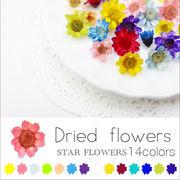 ネイル 新色追加♪ スターフラワー ガラスドームに【生花を使用したドライフラワー14色】約10個入り
