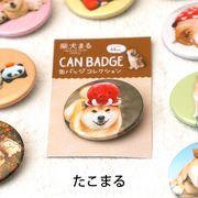 柴犬まるのコレクション缶バッジ: たこまる