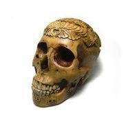 化石 骨格標本 レプリカ 頭蓋骨 紋様入り