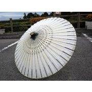 和傘-番傘 シマ (装飾用)日傘