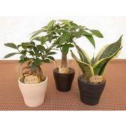 アースカラーウェアM ミニ観葉植物/観葉植物/モダン/インテリア/寄せ植え/ガーデニング