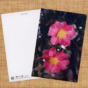 花のポストカード サザンカ(ピンク)2