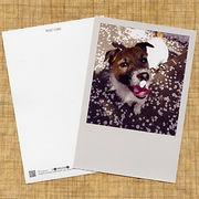 犬のポストカード ジャックラッセルテリア01