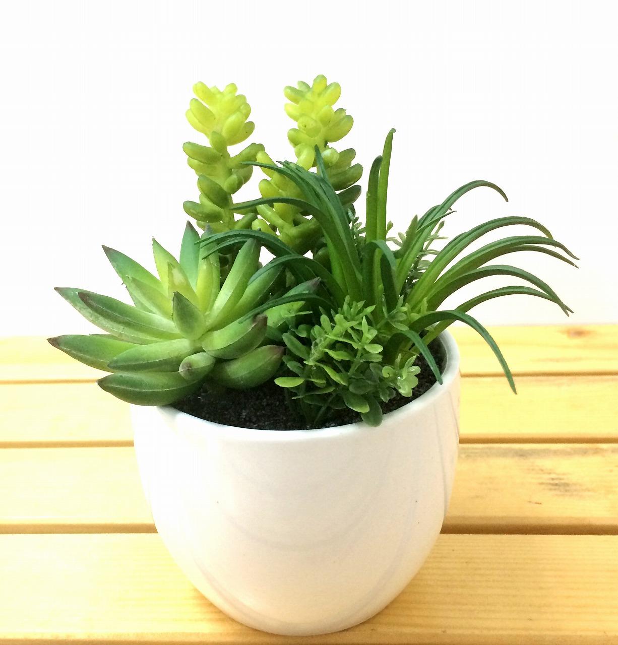 光触媒】サキュレントプランツ 多肉植物【緑】【観葉植物】【インテリア