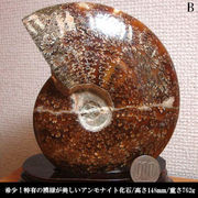 アンモナイト化石/762g/B