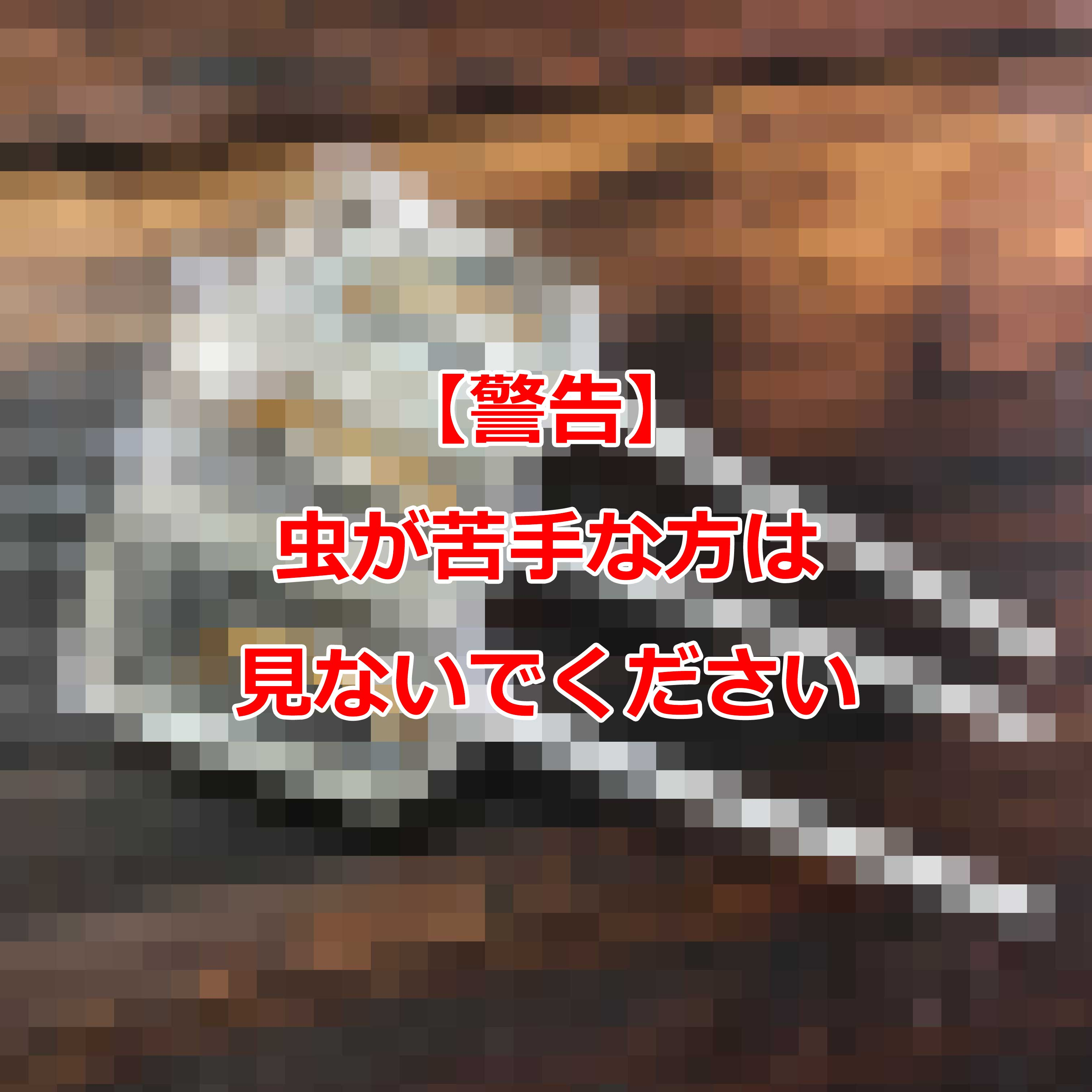 ワームサッカー・テキーラ(イモムシキャンディー・テキーラ味)罰ゲーム飴・ハロウィン
