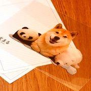 柴犬まるのクリアファイル ぷりけつ三兄弟