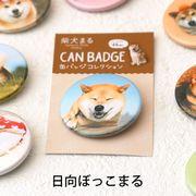 柴犬まるのコレクション缶バッジ: 日向ぼっこ