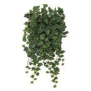 【送料無料】壁面緑化アイビ-