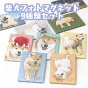 フォトマグネット【柴犬】9種類アソート