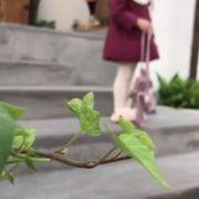 女児 コットンコート アウターウェア 冬 新しいデザイン かわいい ガール 中長スタイル