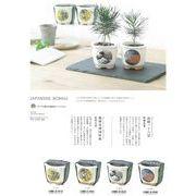 JAPANESEBONSAI黒松の栽培セット【雑貨】