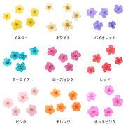【ネイル業務用】ドライフラワー5枚花 2000枚パック 小花 押し花
